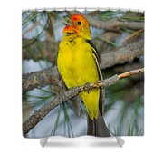 Western Tanager Singing Shower Curtain