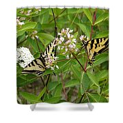 Western Tiger Swallowtail Butterflies Shower Curtain