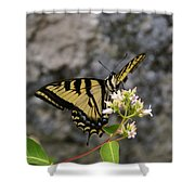 Western Tiger Swallowtail Butterfly 2 Shower Curtain
