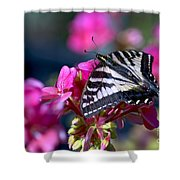 Western Tiger Swallowtail Butterfly On Geranium Shower Curtain