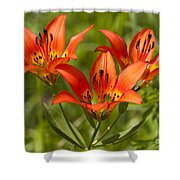 Western Wood Lily Shower Curtain