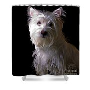 Westie Drama Shower Curtain by Edward Fielding