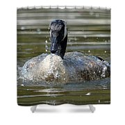 Wet And Wild - Canadian Goose Shower Curtain