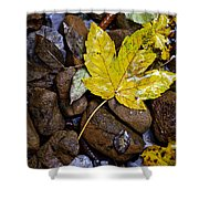 Wet Autumn Leaf On Stones Shower Curtain