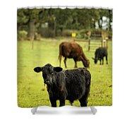 Wet Calf Shower Curtain