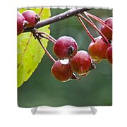Wet Crab Apples Shower Curtain
