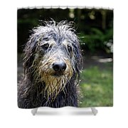 Wet Dog Shower Curtain