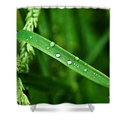 Wet Grasses Shower Curtain