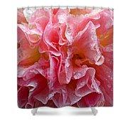 Wet Hollyhock Flower Upclose Shower Curtain