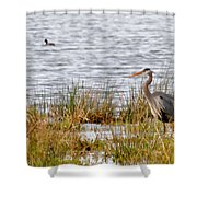 Wet Land Life Shower Curtain