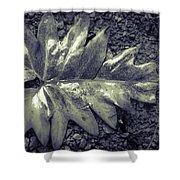 Wet Leaf Shower Curtain