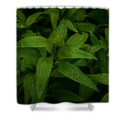 Wet Leaves Shower Curtain