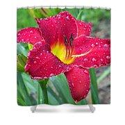 Wet Red Razzmatazz Daylily 1 Shower Curtain