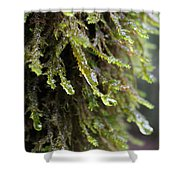 Wet Redwood Branches Shower Curtain