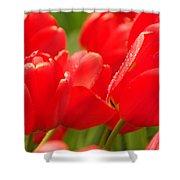 Wet Tulips Shower Curtain