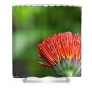 Wetback Shower Curtain