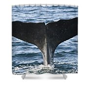 Whale Diving Shower Curtain