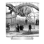 Whale Skeleton, 1866 Shower Curtain