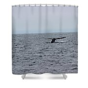 Whale Tail 2 Shower Curtain