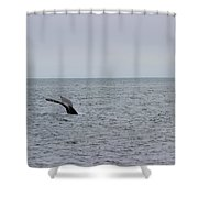 Whale Tail 8 Shower Curtain