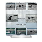 Whale Tails Shower Curtain