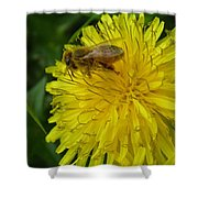 What A Pollenicious Day Shower Curtain