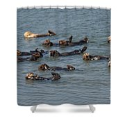 What Otters Do Best Shower Curtain