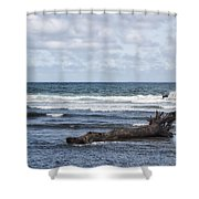 What The Sea Brought Back Shower Curtain