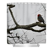 What's That? Shower Curtain