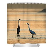 What's Up 1940 Shower Curtain