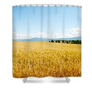 Wheat Field Near D8, Brunet, Plateau De Shower Curtain
