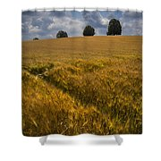 Wheat Fields Shower Curtain