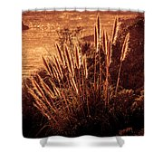 Wheat Grass Shower Curtain