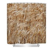 Wheat Harvest Shower Curtain