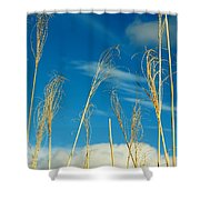 Wheat In The Sky Shower Curtain