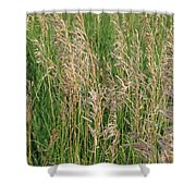 Wheat In The Wind Shower Curtain