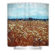 Wheat Reeds Shower Curtain