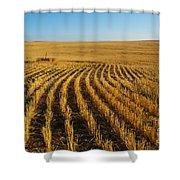 Wheat Rows Shower Curtain
