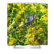 Wheel Bug  Shower Curtain