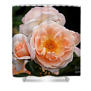 Wheeping Rose Shower Curtain