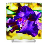 When Iris Eyes Are Smiling Shower Curtain