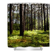 When The Forest Beckons Shower Curtain by Karen Wiles