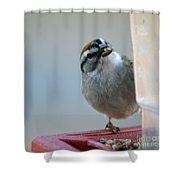 Where Did All My Food Go? Shower Curtain