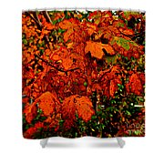 Where Has All The Red Gone - Autumn Leaves - Orange Shower Curtain