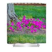 Where Petunia Grows Shower Curtain