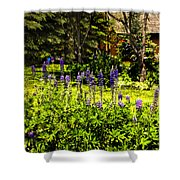 Where The Lupines Grow Shower Curtain