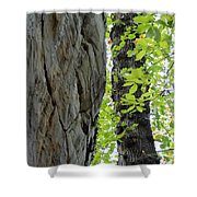 Where The Tree Meets The Stone Shower Curtain