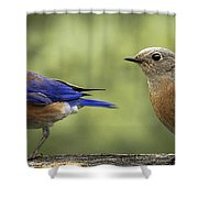 Which One Do You Want Shower Curtain