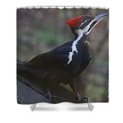Which Way Is The Suet? Shower Curtain