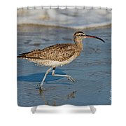 Whimbrel Running Shower Curtain